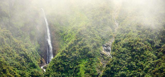 A Bolivian 'Cloud Forest' Reveals a Bonanza of New Species